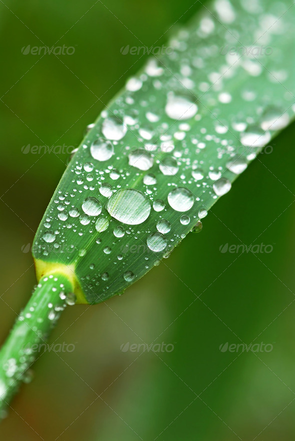 Raindrops On Grass - Stock Photo - Images