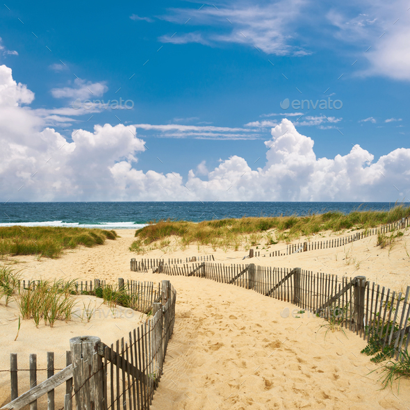 Path way to the beach at Cape Cod - Stock Photo - Images