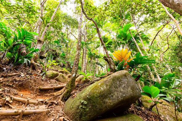 Tropical rain forest and jungle in Seychelles - Stock Photo - Images
