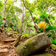 Tropical rain forest and jungle in Seychelles - PhotoDune Item for Sale