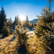 Funny cute Christmas tree sprinkled with white snow on a sunny meadow in the Carpathian mountains - PhotoDune Item for Sale