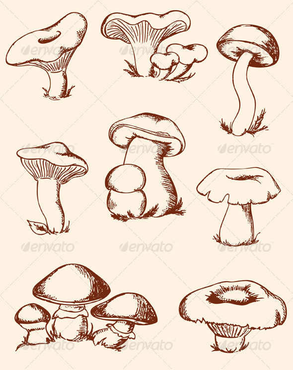 Vintage Forest Mushrooms - Food Objects