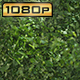 Chopped Parsley - VideoHive Item for Sale