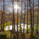 Bald cypress trees, Taxodium Distichum, in swamp in the American South at sunset. - PhotoDune Item for Sale