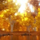 Autumn Forest Pack - VideoHive Item for Sale