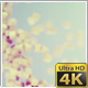 Clean Particles Background Pack - VideoHive Item for Sale