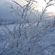 Winter plants - PhotoDune Item for Sale