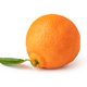 Ripe mandarines on a white background - PhotoDune Item for Sale