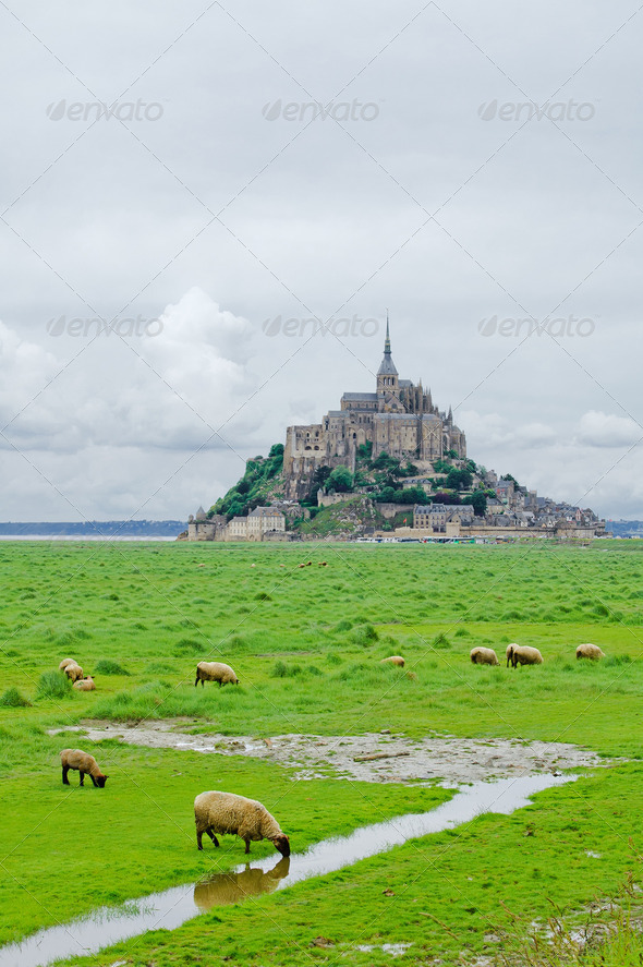 Sheeps near Mont Saint Michel. Normandy, France. - Stock Photo - Images