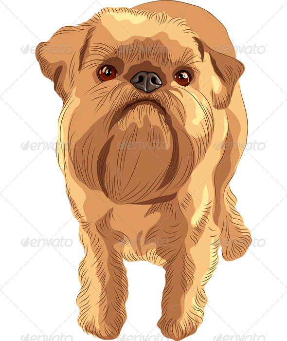 Vector sketch red dog Brussels Griffon breed  - Animals Characters