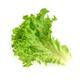 Salad leaf. Lettuce isolated on white background - PhotoDune Item for Sale