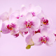 Beautiful orchid flowers on a pink background. Floral background - PhotoDune Item for Sale