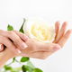 Hands of a woman with beautiful french manicure and a white rose - PhotoDune Item for Sale