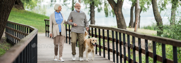 smiling senior couple walking with golden retriever dog in park - Stock Photo - Images