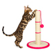 Cute 4 month old Bengal kitten sharpening claws on scratching post. - PhotoDune Item for Sale