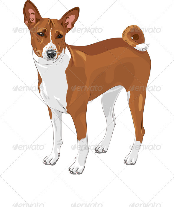 Vector Sketch Hunting Dog Basenji Breed - Animals Characters