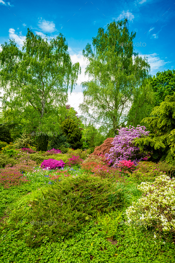 Beautiful Garden with blooming trees during spring time - Stock Photo - Images