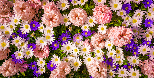 Shot Of Colorful Flowers.  Floral Background - Stock Photo - Images