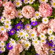 Shot Of Colorful Flowers.  Floral Background - PhotoDune Item for Sale
