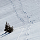 Snow background with ski and snowboard tracks - PhotoDune Item for Sale
