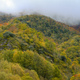 Valleys and hills covered with deciduous forest among the mist - PhotoDune Item for Sale