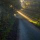 Sunbeams break through the foliage of trees - PhotoDune Item for Sale