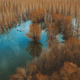 Aerial view of flooded woodland from drone pov - PhotoDune Item for Sale