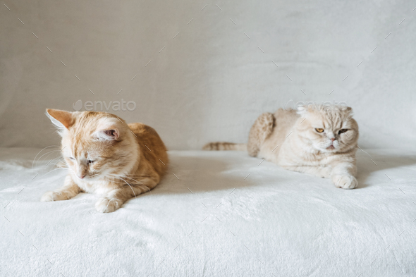 Introducing Two Cats. Adopt a Second Cat. Adding a second cat to your household. Peaceful multi-cat - Stock Photo - Images