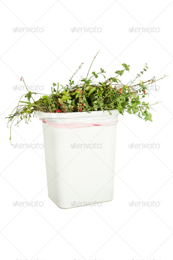 Vegetation in trash can - Stock Photo - Images
