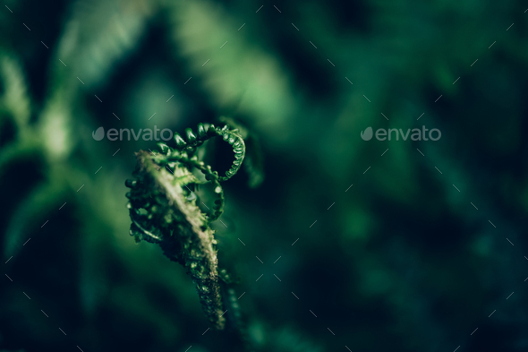 Close up of Green Fern - Stock Photo - Images