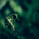 Close up of Green Fern - PhotoDune Item for Sale