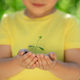 Child holding young green plant in hands - PhotoDune Item for Sale