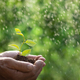 Senior man holding young green plant in hands - PhotoDune Item for Sale
