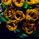 Flowerbeds of blossoming tulips - PhotoDune Item for Sale
