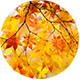 Autumn Forest Nature Logo - VideoHive Item for Sale