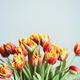 Bouquet of Red Orange Tulips. Spring Flowers. - PhotoDune Item for Sale