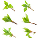 Set of Spring buds on white background - PhotoDune Item for Sale