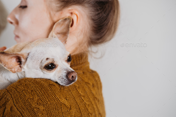 Pet love, homeless dog adoption, caring for a pet and animal concept. Pet Lovers, Animal Lovers - Stock Photo - Images