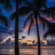 Sunset and palms - PhotoDune Item for Sale