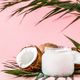Coconut oil and coconuts on a bright pastel background. - PhotoDune Item for Sale