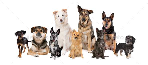 mixed breed dogs in a row - Stock Photo - Images