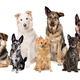 mixed breed dogs in a row - PhotoDune Item for Sale