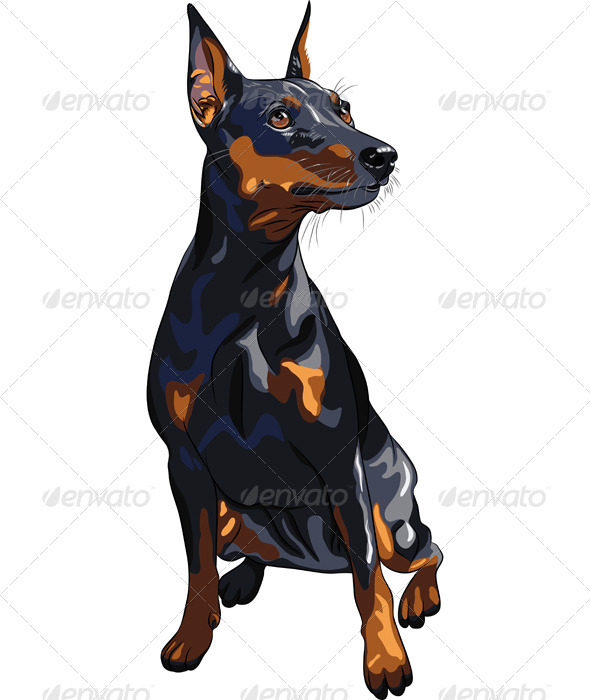 Vector Dog Serious Miniature Pinscher Breed sittin - Animals Characters