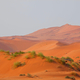 Sand desert in Namib - PhotoDune Item for Sale