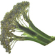 Dried flattened Broccoli head (Brassica oleracea var. italica), isolated, top  view - PhotoDune Item for Sale