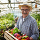 Farmer with vegetables - PhotoDune Item for Sale