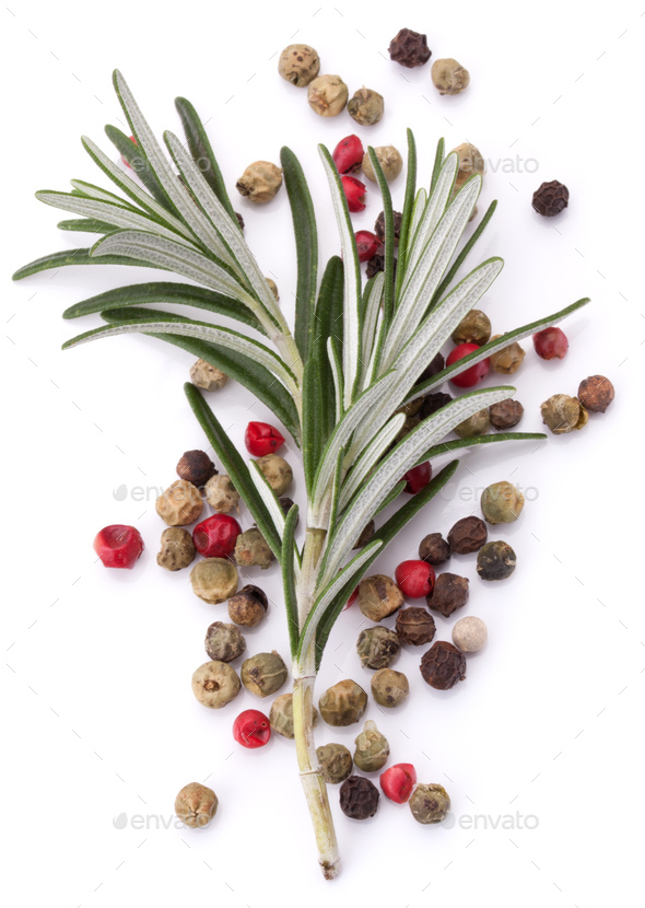 rosemary herb spice leaves and peppercorns isolated on white background cutout - Stock Photo - Images