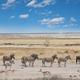 African safari - PhotoDune Item for Sale