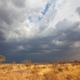 African bush - PhotoDune Item for Sale