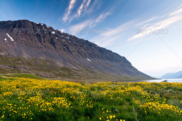 mountain and meadow of yellow flowers - Stock Photo - Images